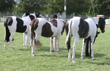 three painted ponies poster