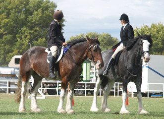 mounted clydsedales