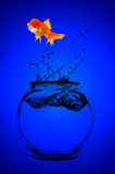 goldfish looking for a better opportunity poster