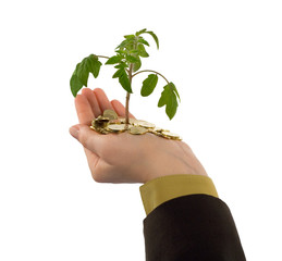 plant in hand and coins