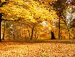 Leinwanddruck Bild yellow is autumn