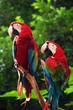 roleta: parrot