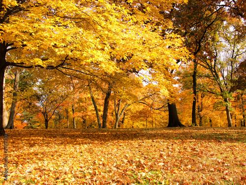 Leinwandbild Motiv yellow is autumn