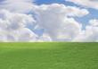 grass, nature, cloud, animal, clear sky, blue sky,