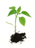 newborn plant with soil on white poster