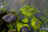 sea stones with green moss poster