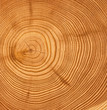 wooden cut texture - 2803150