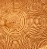 Fototapety wooden cut texture