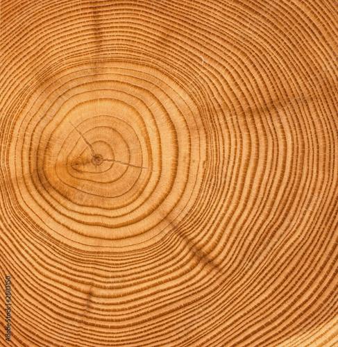drewniana cięta tekstura