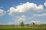 meadow with cows and white clouds poster