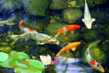 Fototapete Laufen - Running - Fische