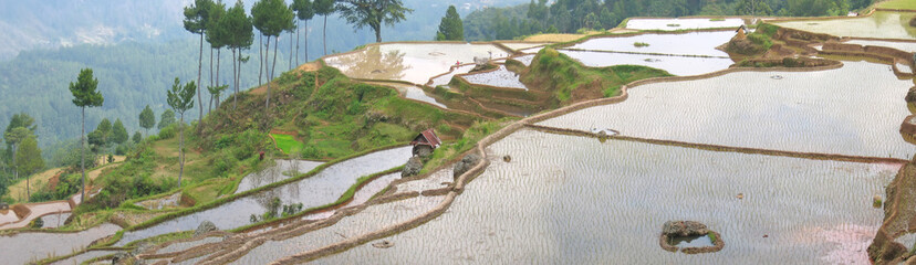 very large view of levered ricefields with water, rantepao, sula