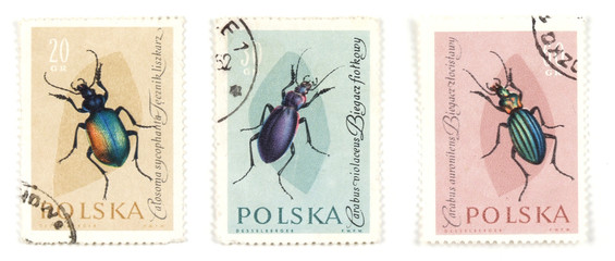 bugs and insects on postage stamps