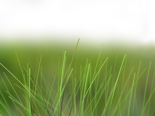 grass beauty
