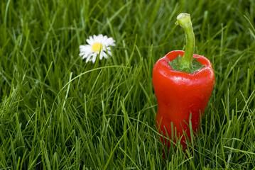 wiesen-paprika