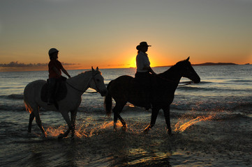 horses excercising at daybreak on the beach