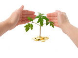 hands protecting a plant - isolated poster