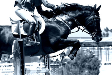 crossing the hurdle - equestrian theme (blue)