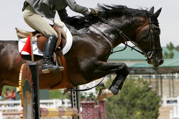 crossing the hurdle - equestrian theme