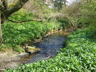 natural stream, plymouth