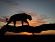 silhouette of leopard on tree - 2870590