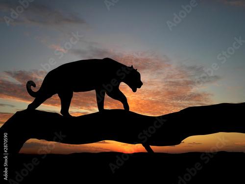 Leinwandbild Motiv silhouette of leopard on tree