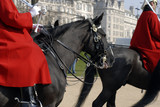 london horse guard parade #3 poster
