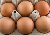brown egg carton poster