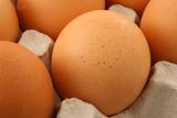 free-range eggs poster