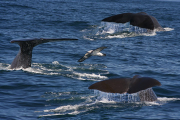 whales and an albatros