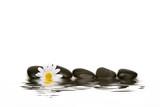 Fototapety spa stones and daisy