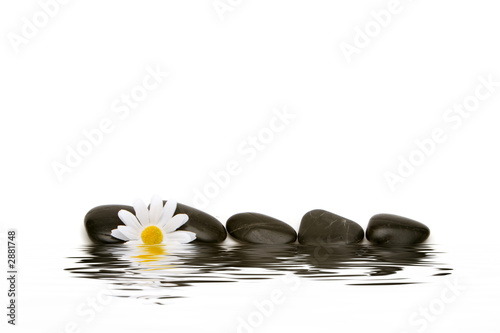 In de dag Gerbera spa stones and daisy
