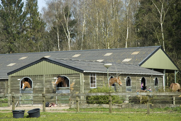 stable for horses