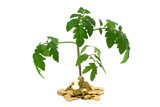 exuberant plant in heap of coins poster