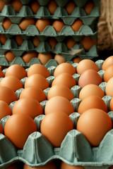 huevos en bandejas de carton