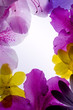 violet flower frame