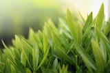 greenery close-up poster