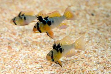 poissons dans l'aquarium