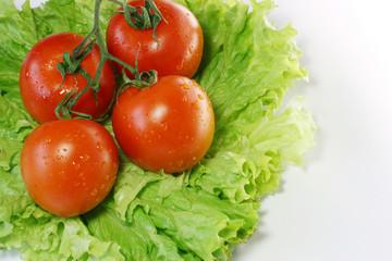 tomatoes on leaves of salad