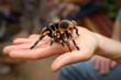tarantula - 2909969