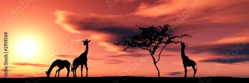 Poster family of giraffes