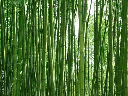 Leinwandbild Motiv bambuswald