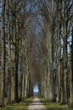 elm tree lane poster