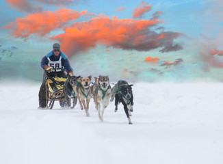 sled dogs at sunset
