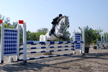 cavallo che salta ostacolo