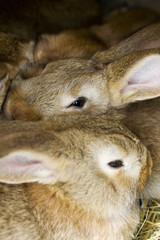 small rabbits