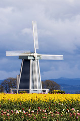 windmill at tulip farm