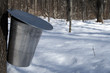 pail for collecting sap to produce maple syrup