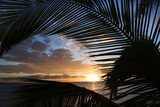 sunset framed by palm fronds, maui hawaii. poster