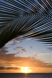 sunset framed by palm, maui, hawaii. poster